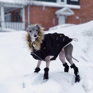 Black Canada Pooch True North Pet Parka